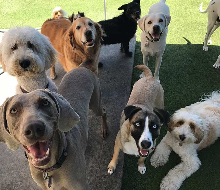 happy doggie daycamp dogs